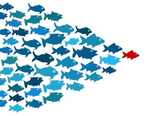 fishes-in-group-leadership