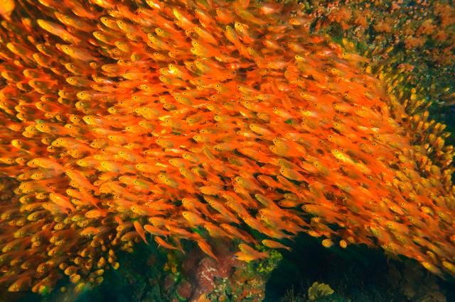 Plenty of fish answer marketing blogs for Plenty fish com
