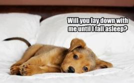 Lay down till I sleep