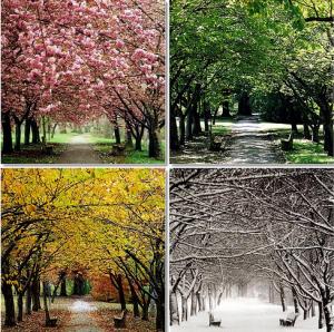 Seasonal change