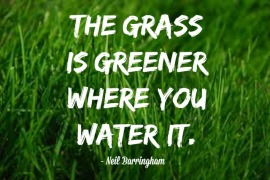 grass-is-greener-where-you-water-it