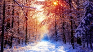 Sunlight in winter