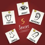 Answer Marketing teaching sense based marketing